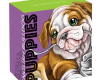 "Silver coin ""Puppies - English Bulldog"", outer box"