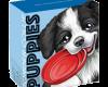 """Сребърна монета """"Кученца – Бордър коли"""", външна кутия"""