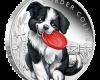 """Silver coin """"Puppies - Border Collie"""", face"""